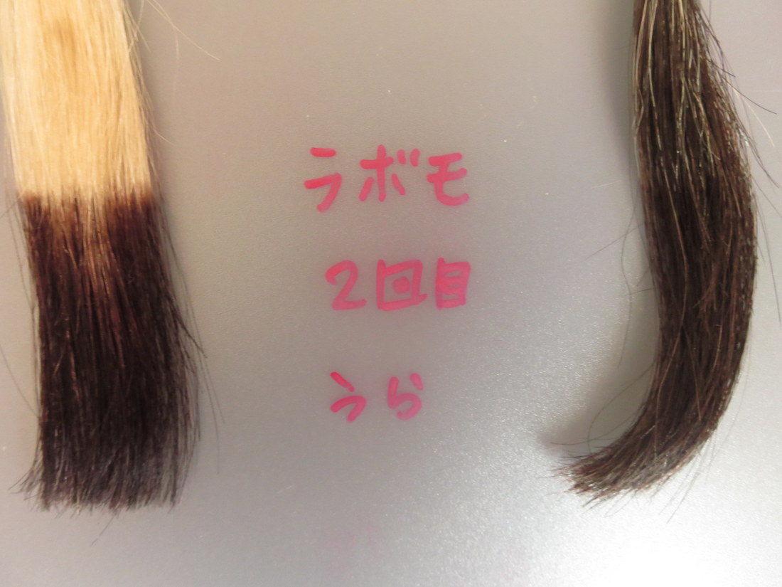 LABOMO(ラボモ)スカルプアロマ ヘアカラートリートメントで白髪染め・2回目・髪の裏側画像