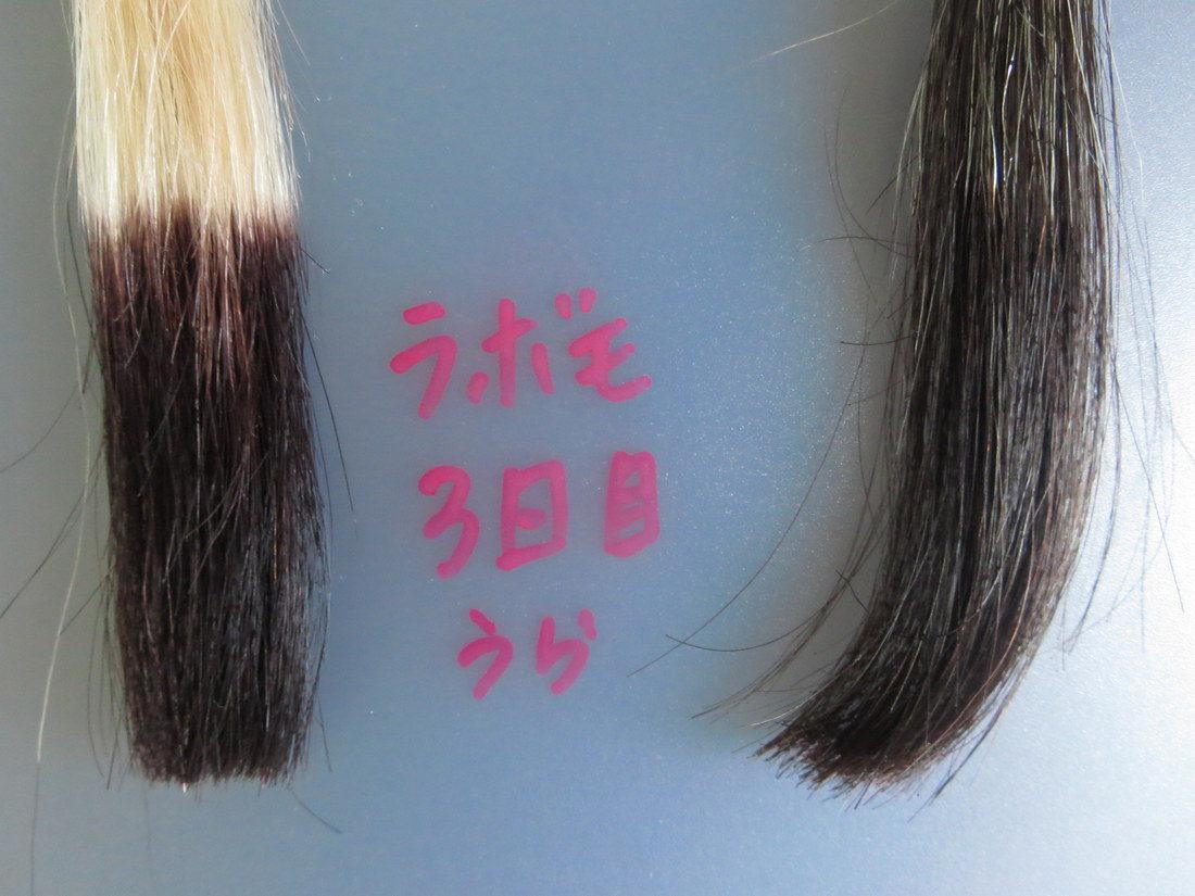LABOMO(ラボモ)スカルプアロマ ヘアカラートリートメント 白髪染め・3回目・裏側比較画像