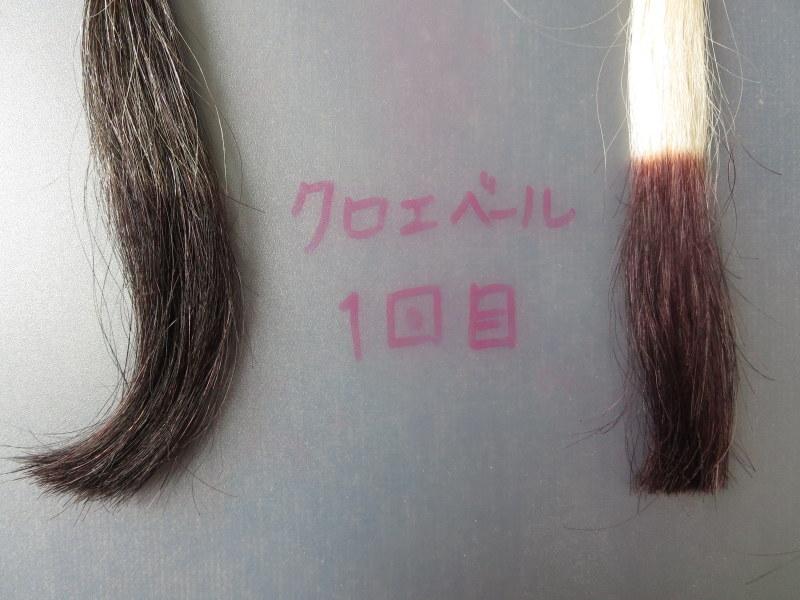 クロエベール白髪染めヘアカラートリートメントで白髪テスターを染めてみました。1回目