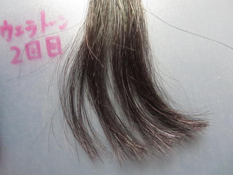 ウエラトーン ヘアカラートリートメントで実際に白髪テスターを染めてみました。2回目 白髪30%は紫色が目立たない