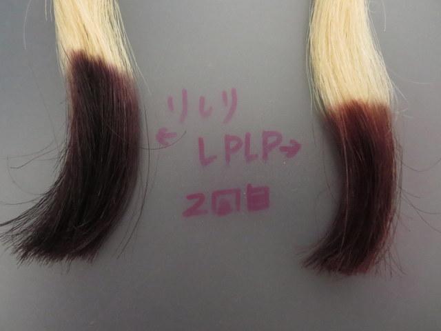利尻ヘアカラートリートメントとLPLP(ルプルプ)ヘアカラートリートメントを実際に白髪テスターを染めて染まりやすさ比較2回目