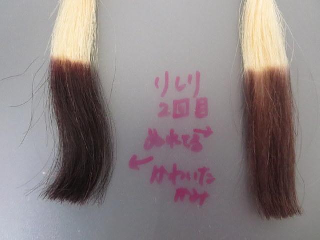 利尻ヘアカラートリートメントを濡れた髪と乾いた髪につけて比較してみました2回目