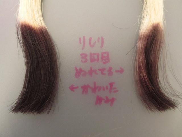 利尻ヘアカラートリートメントを濡れた髪と乾いた髪につけて比較してみました3回目 表側